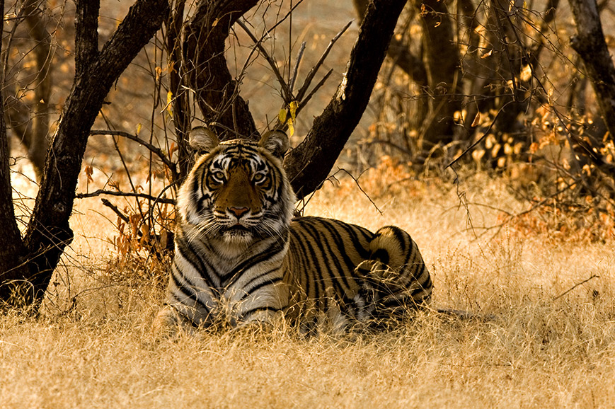 India - Extra Safari in Rathambore
