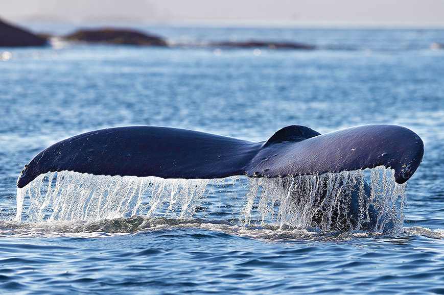 Quebec - Whale Watching
