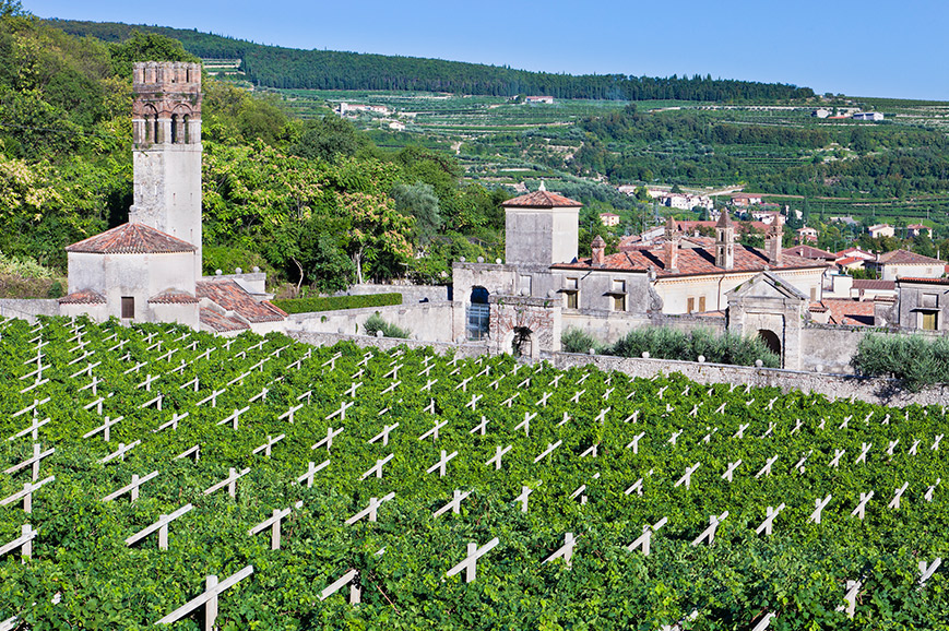 Valpolicella region Winery Tour - Prebookable Only
