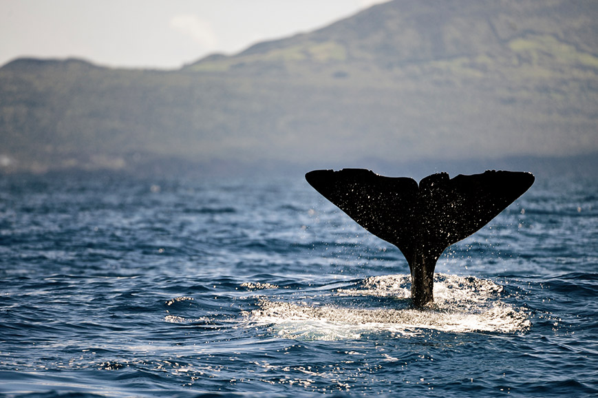 Portugal - Whale Watching - Prebookable Only