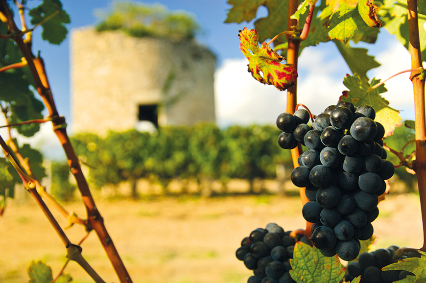 Discovery Package - The Vineyards of Bordeaux