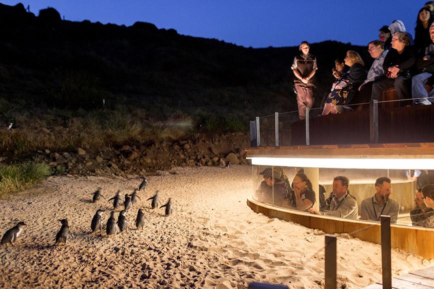 Australia - Phillip Island Penguin Parade Plus - Melbourne
