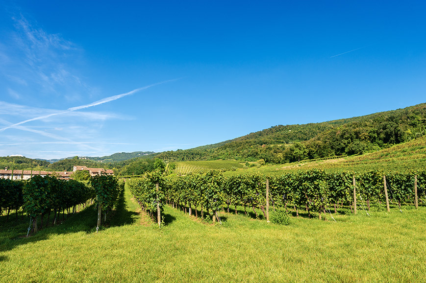 Italy - Valpolicella region Winery Tour