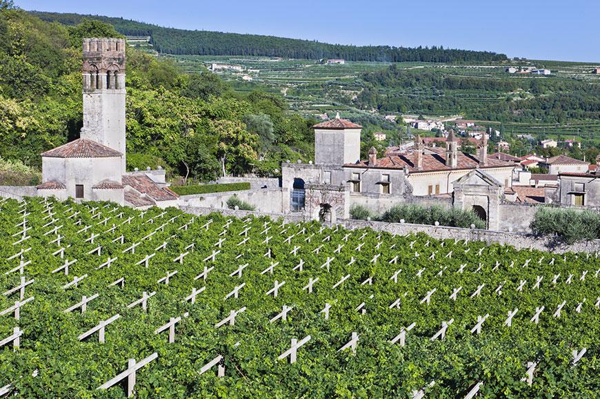 Italy - Valpolicella Wine Region