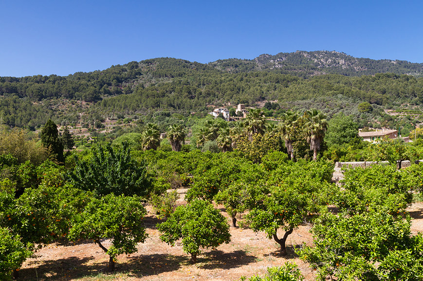 Spain - Walk the oranges path through the Soller Valley