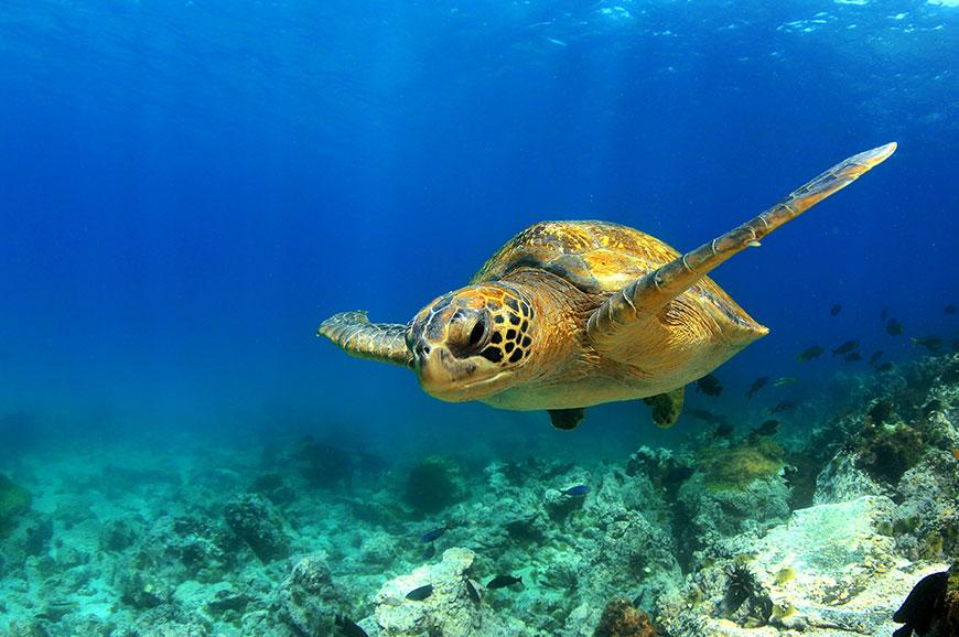Galapagos Islands - Tintoreras snorkelling and hike tour