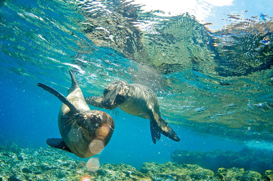 Galapagos Islands - Los Tuneles snorkelling experience