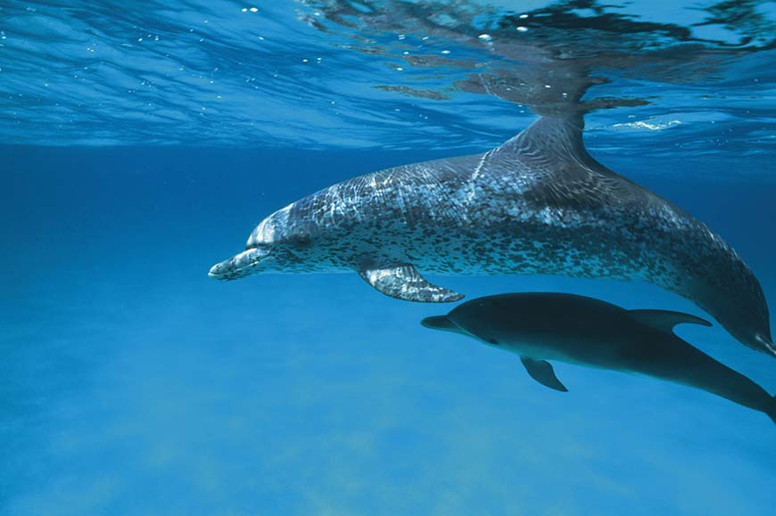 St Lucia - Dolphin and Whale Watching