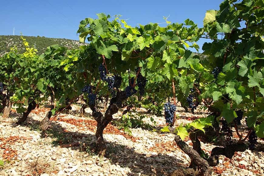 Croatia - Traditions of Konavle and its vineyards