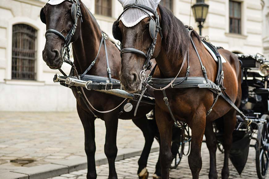 Fiaker horse and carriage ride plus the Imperial Apartments