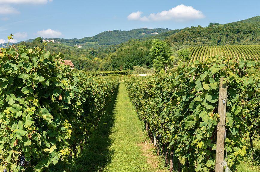 Italy - Amarone tasting in the Valpolicella wine region
