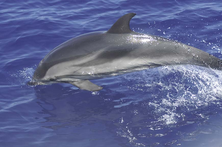 Italy - Cruise in search of Dolphins from Alghero