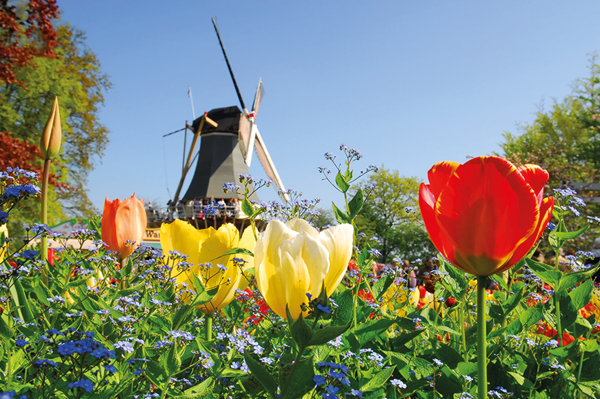 Holland and The Classic Rhine - Discovery Package