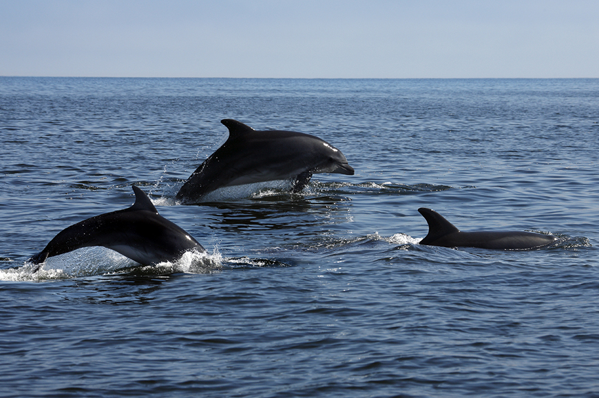 Namibia - Swakopmund - Dolphin and Seal Catamaran Cruise