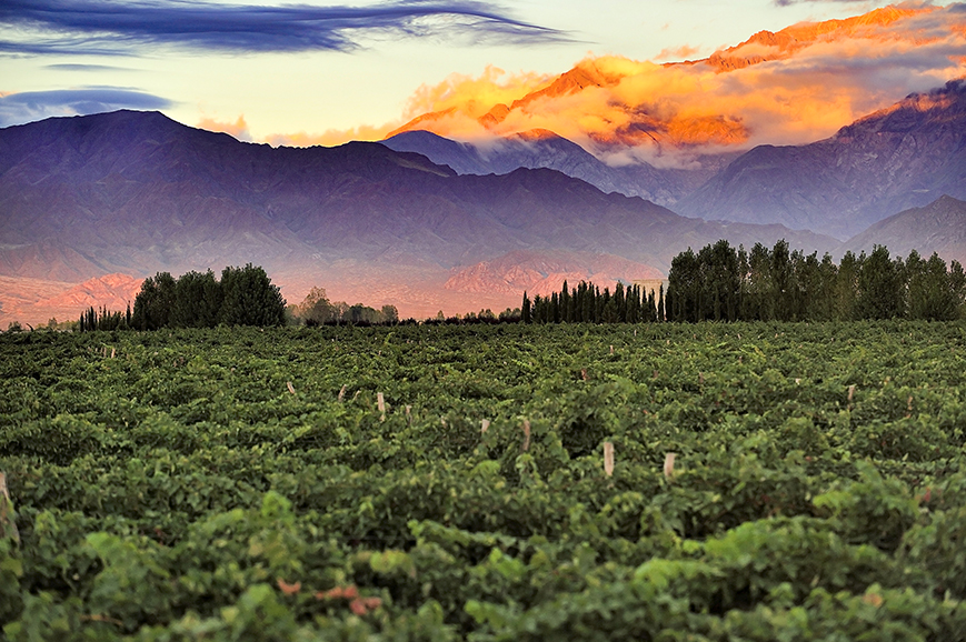 Vineyard, Mendoza