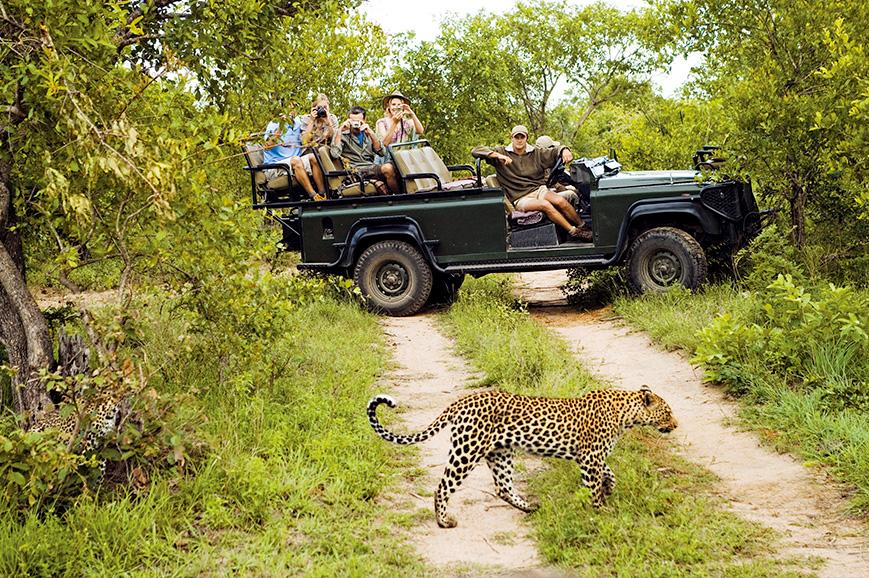 Game drive in Kruger National Park