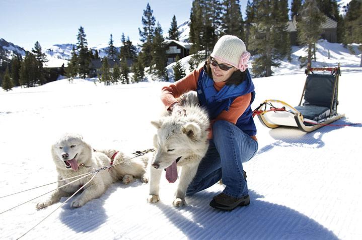 Husky dog ride
