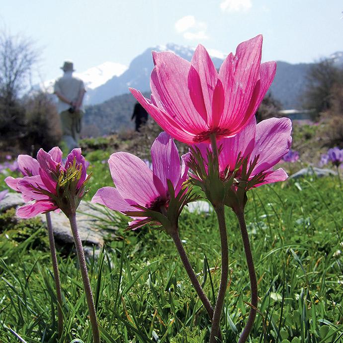Wildflowers of Crete