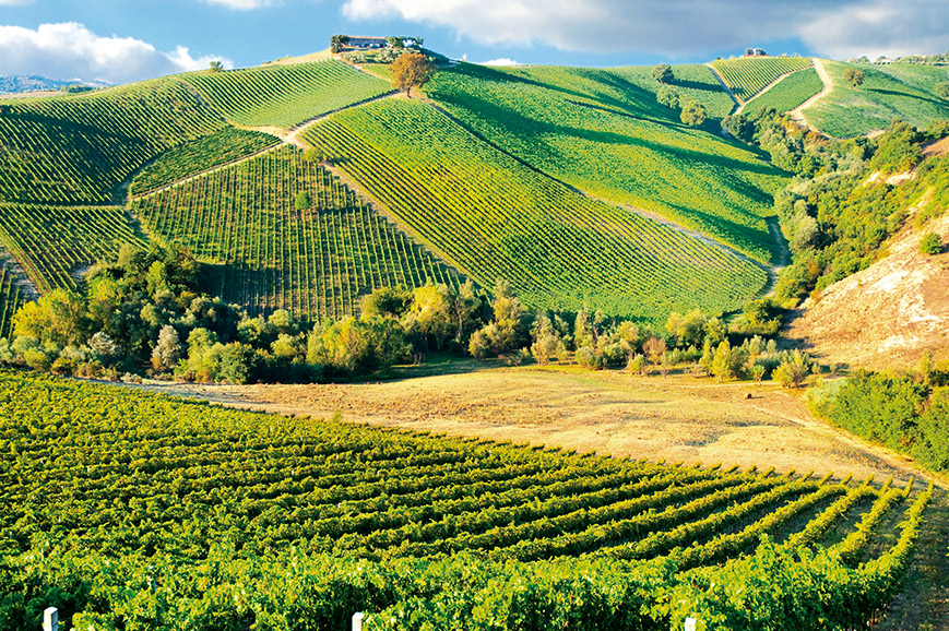 Chianti vinyards