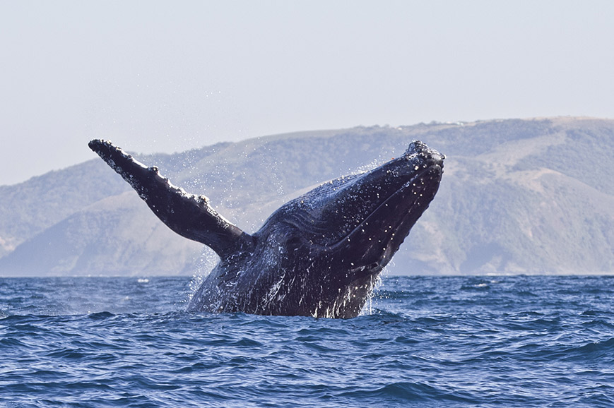 Ultimate South Africa - Whale Watching special departure