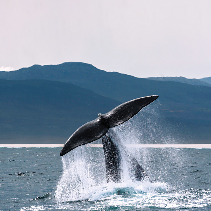 Ultimate South Africa Whale-Watching Special Departure