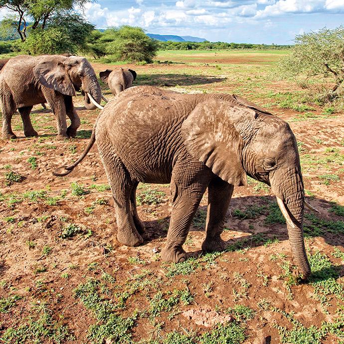 Southern Tanzania Safari & Zanzibar