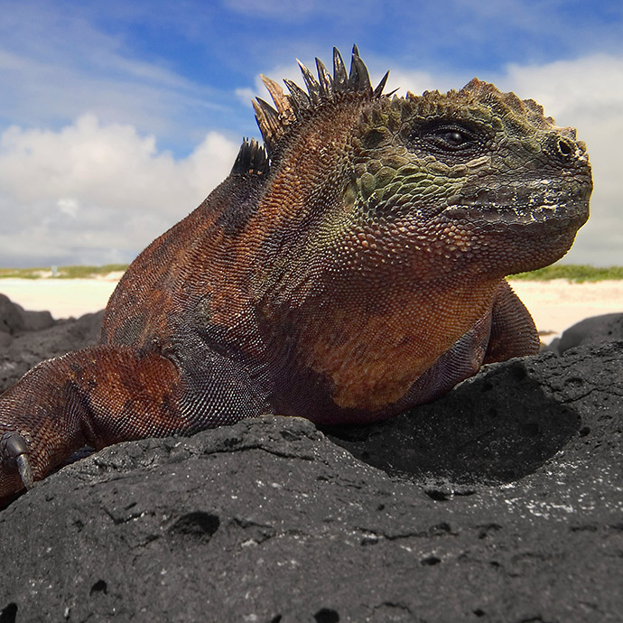 Darwin's Galapagos - aboard Celebrity Xpedition