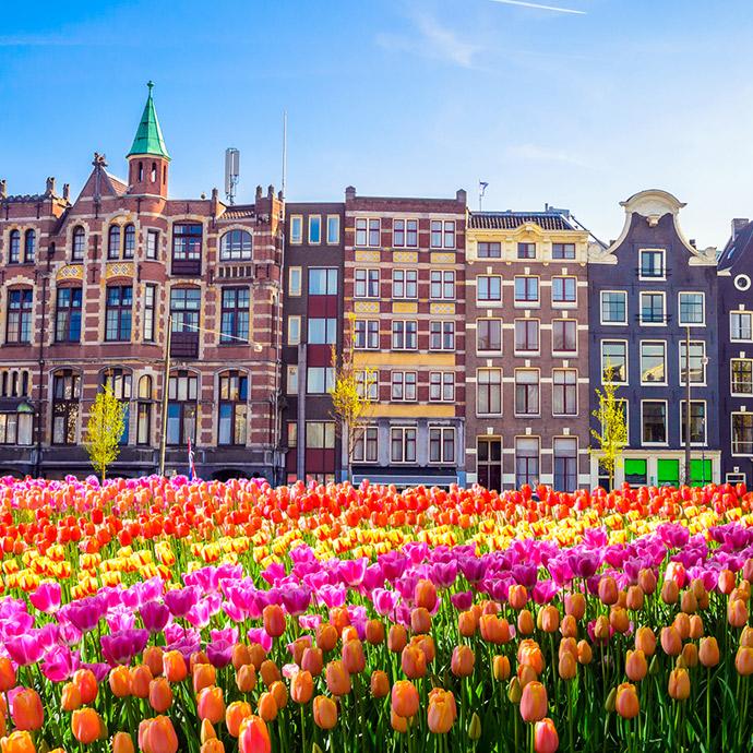 Amsterdam in Full Bloom