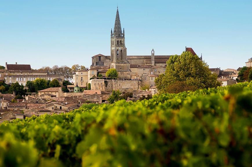 Vineyard, St Emilion