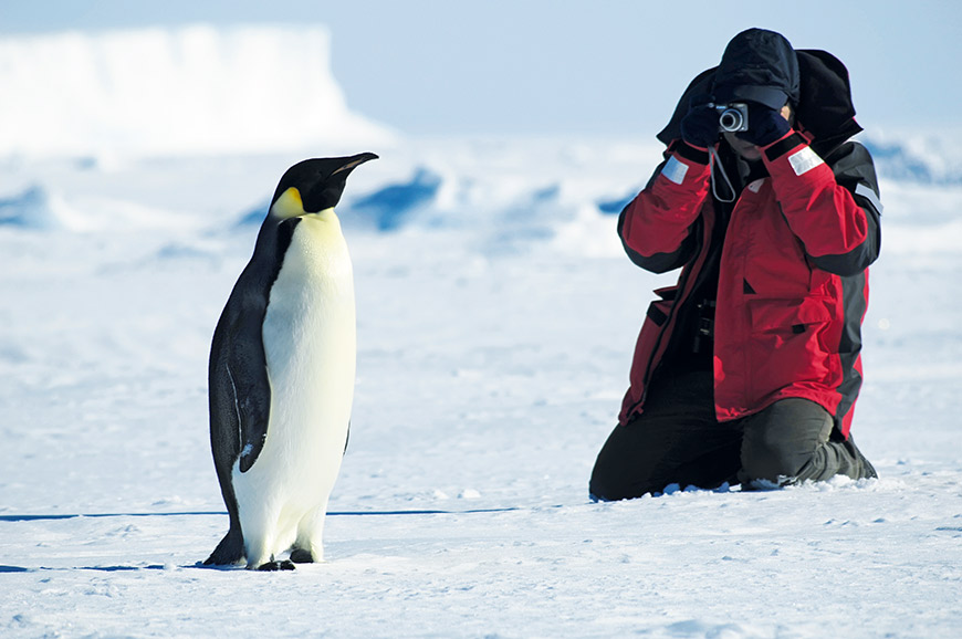 Penguin of the Antarctic