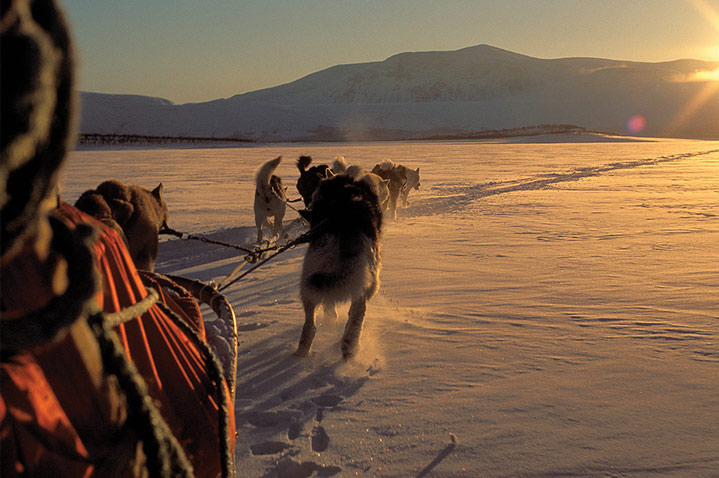 Husky-driven sleigh ride
